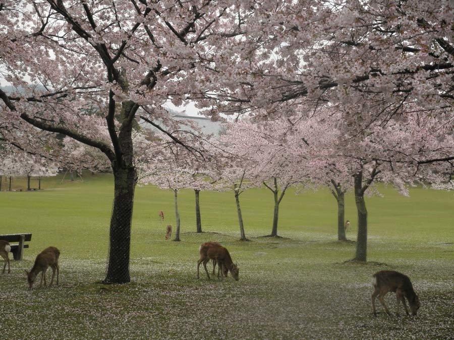 Colorful Kansai Japan Nara Park