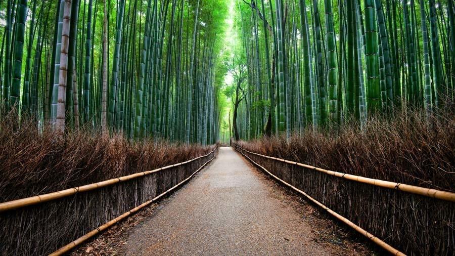 Colorful Kansai Japan Bamboo