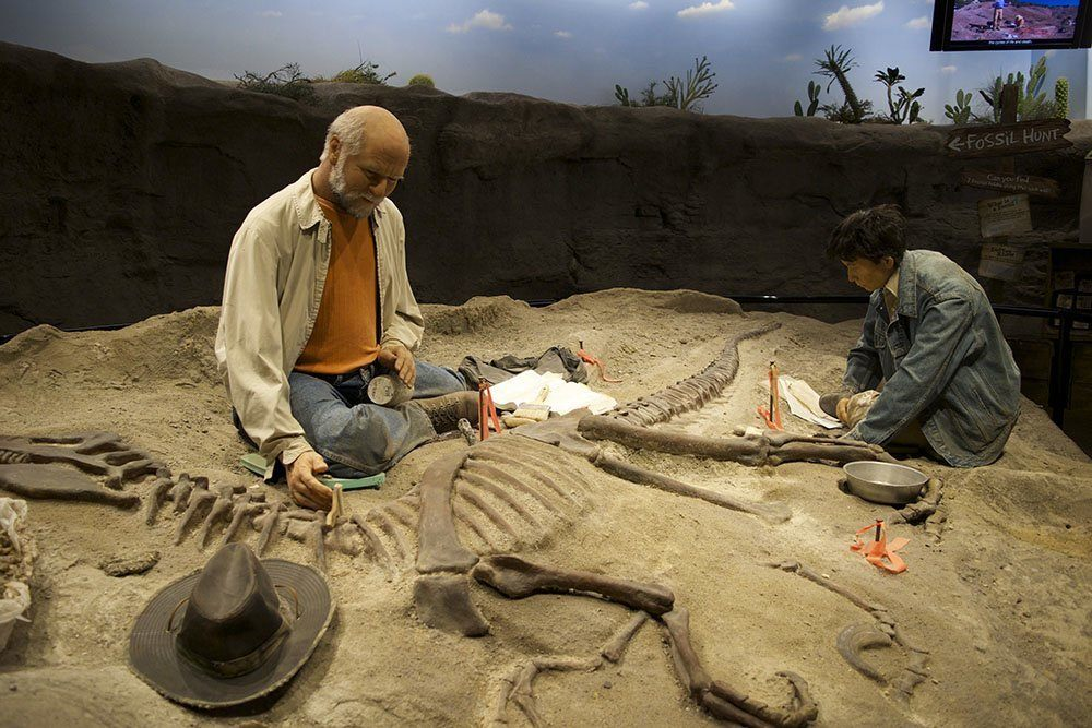 Creation Museum Fossil Dig