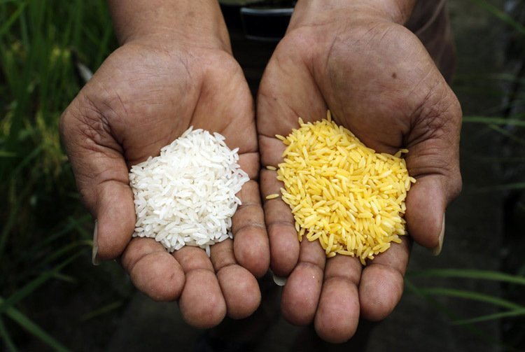 Gmo Foods Golden Rice
