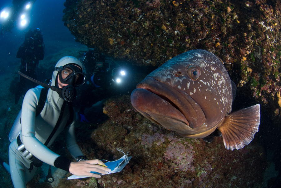 Grouper Fish Divers