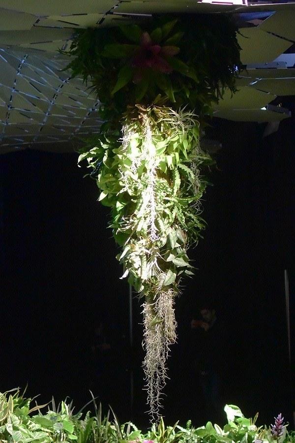 Lowline Hanging Plant