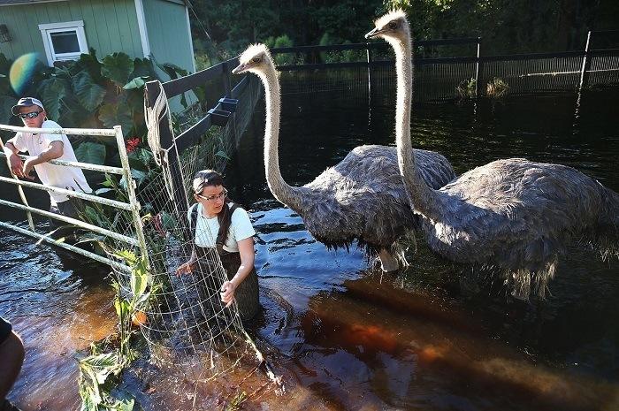 Ostrich South Carolina Flood