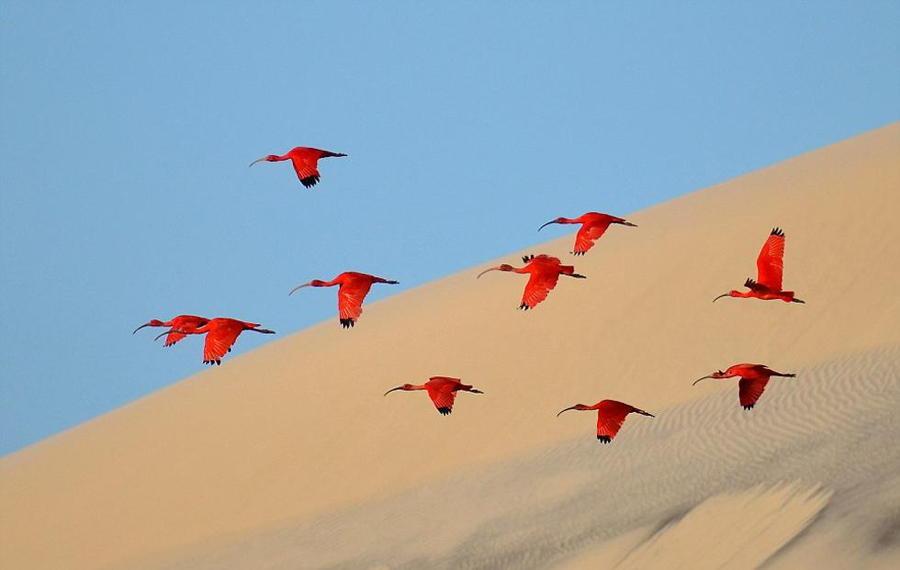 Scarlet Ibis Sand Sky