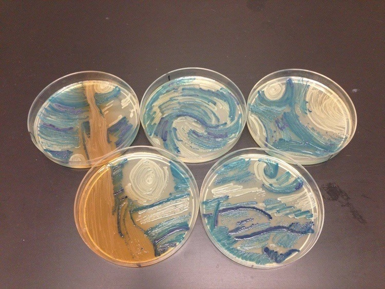 Starry Night Bacteria