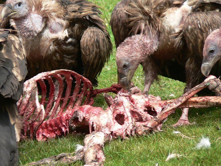 Weird Death Rituals Sky Burial