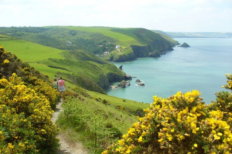 Best Hiking Trails Wales Flowers