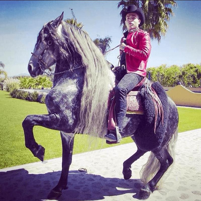 Narco Instagram Horse
