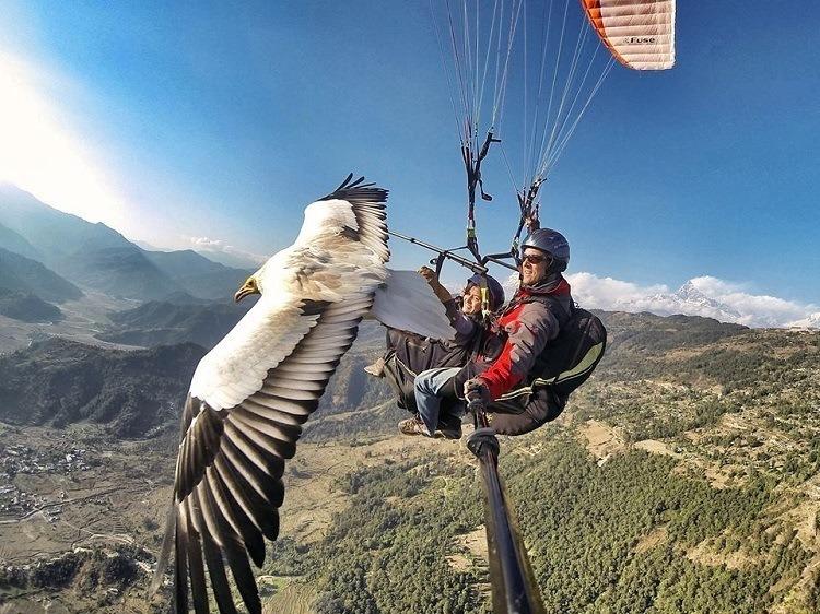 Best Gopro Photos Bird