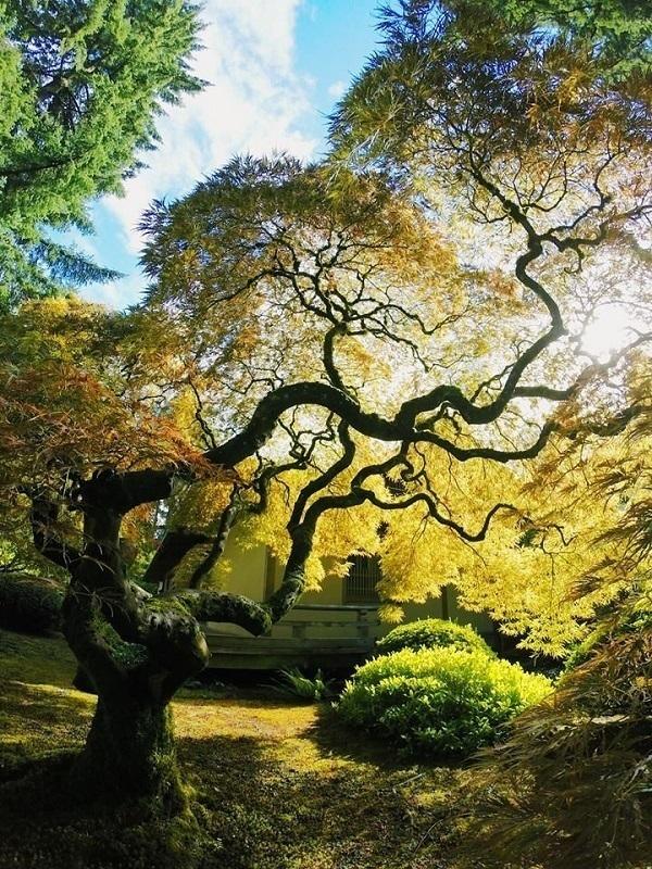 Best Gopro Photos Tree