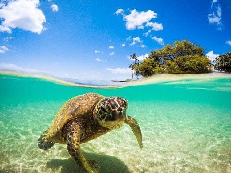 Best Gopro Photos Turtle