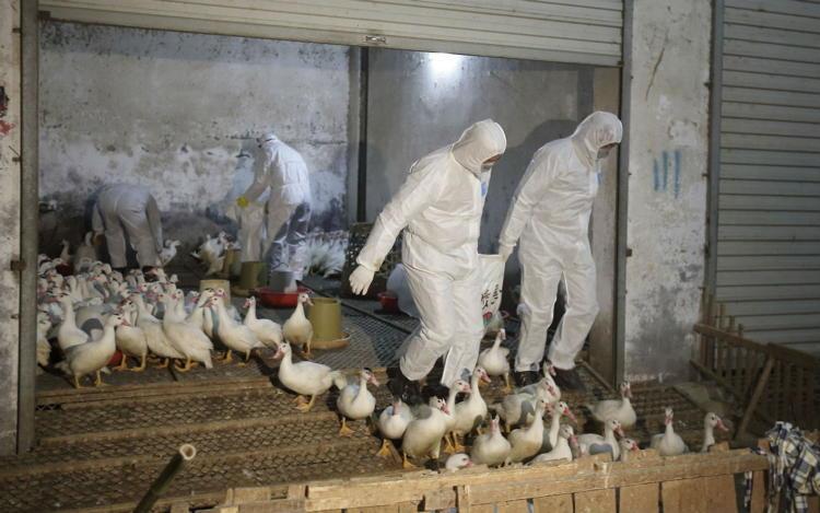 Bird Flu Corrupted Blood
