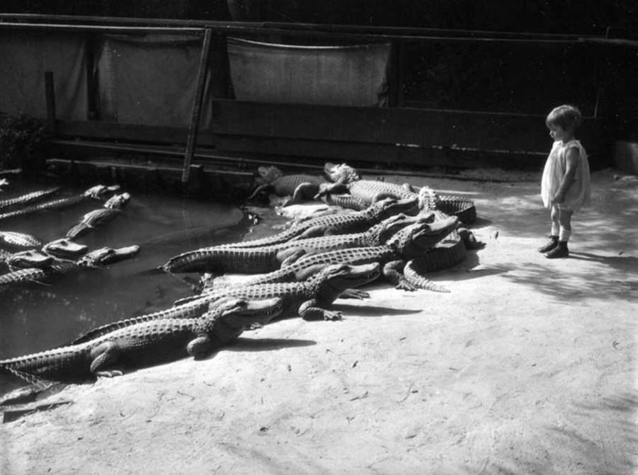 Child Standing Near Alligators