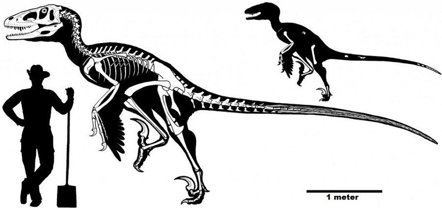Dakotaraptor Size Comparison