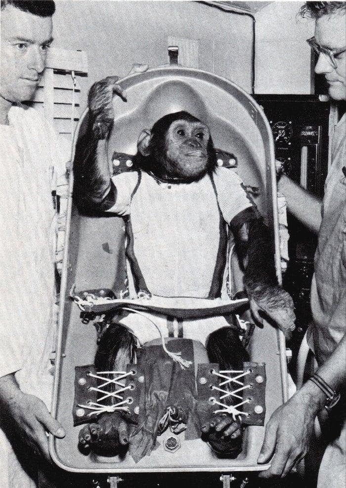 Enos Space Chimp