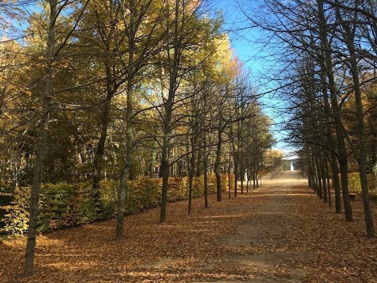 Fall Granja Street View
