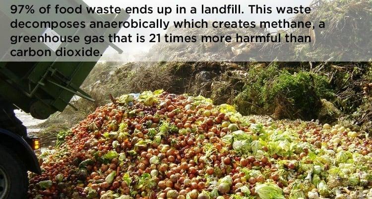Food Waste Dump