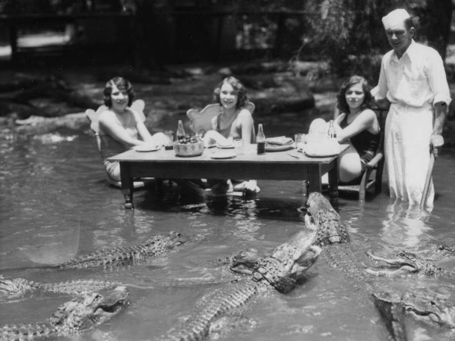 People Eating Near Alligators