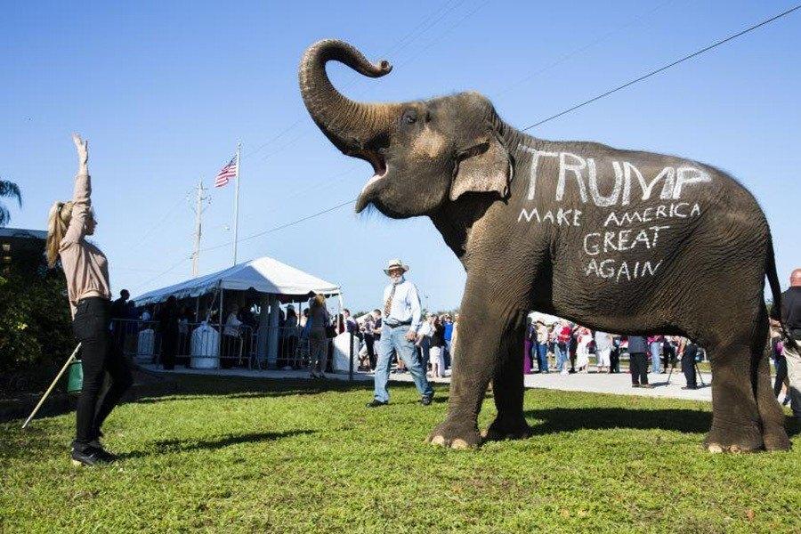 Donald Trump Fans Elephant