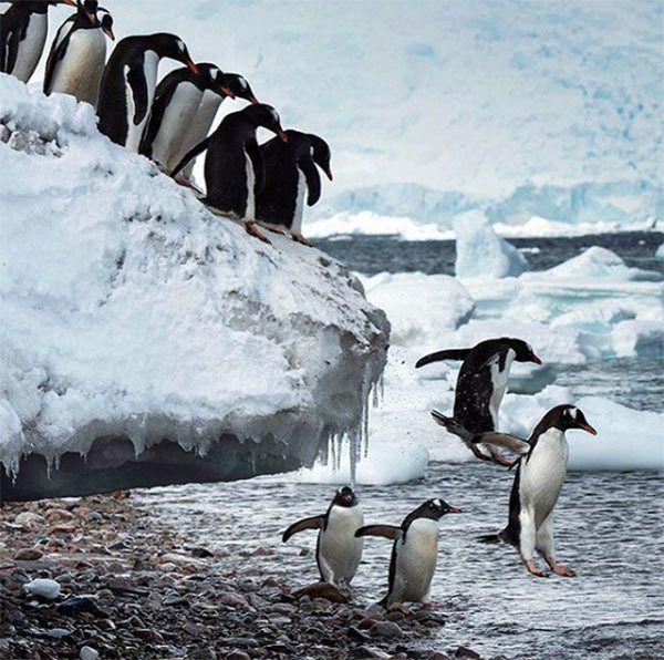 Influential Instagrams WWF