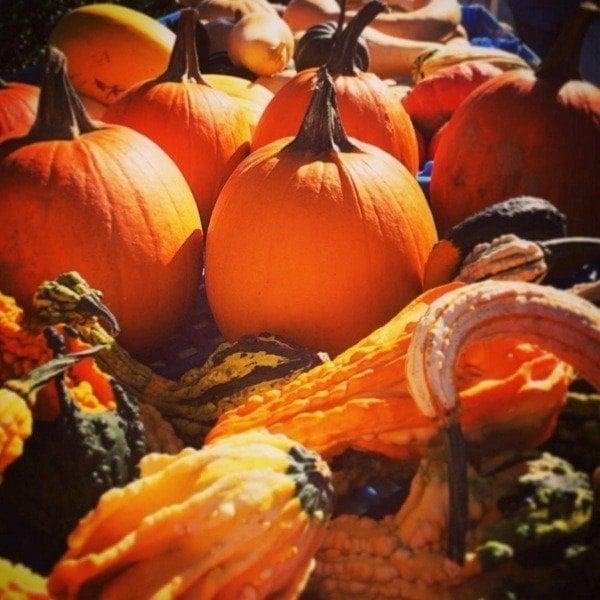 Pumpkins Squash Sunlight