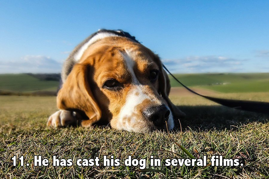 Steven Spielberg Facts Dog