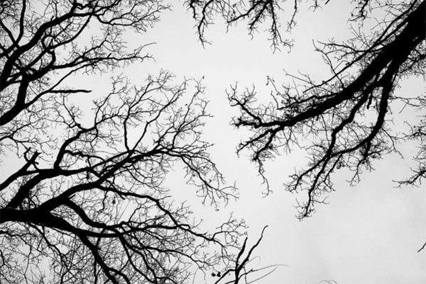 Winter Instagram Photos Flagstaff Arizona Trees