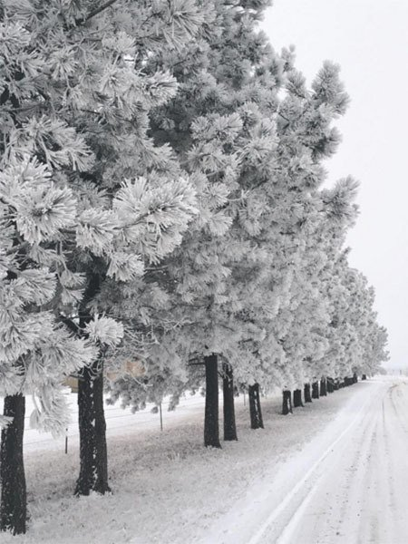 Winter Instagram Photos North Dakota Trees