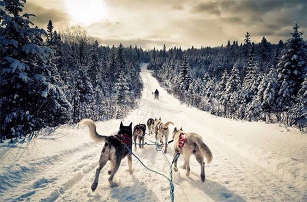 Winter Instagram Photos Russia Dogs