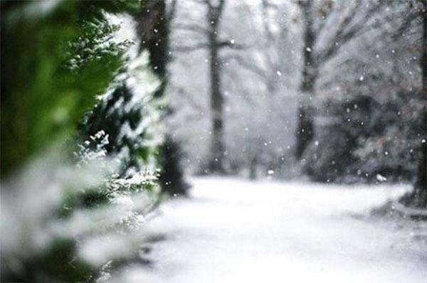 Winter Instagram Photos Snow Evergreen