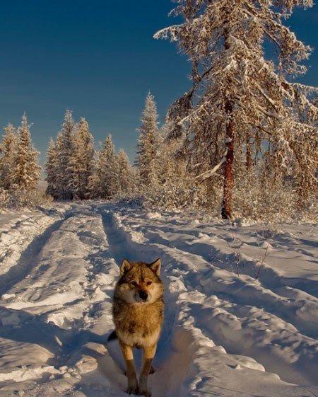 Winter Instagram Photos Yakutsk