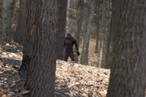 Bigfoot Hiding