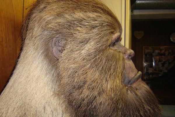 Bigfoot Taxidermy