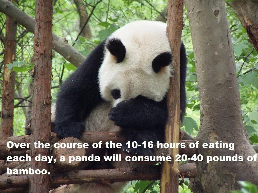 Bamboo Consumption