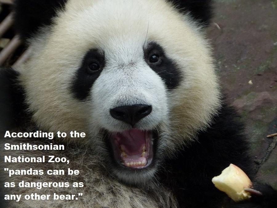 Dangerous Pandas