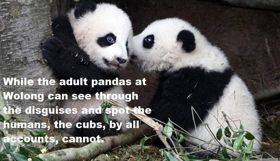 Panda Disguises