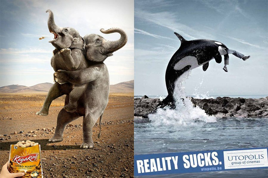 Elephants Whales
