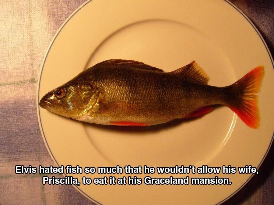 Fish Plate Elvis