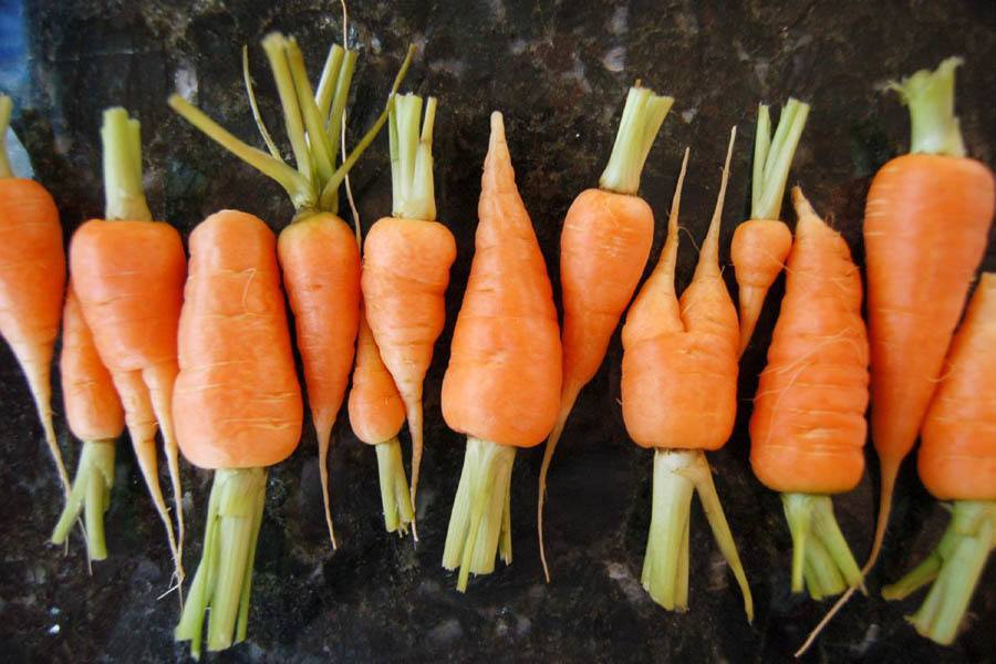 Organic Food Myths Carrots