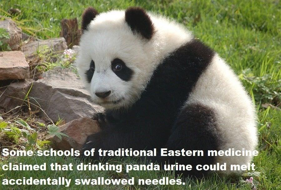 Panda Urine Needles