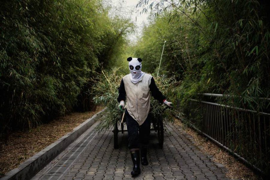 Pandas Employee