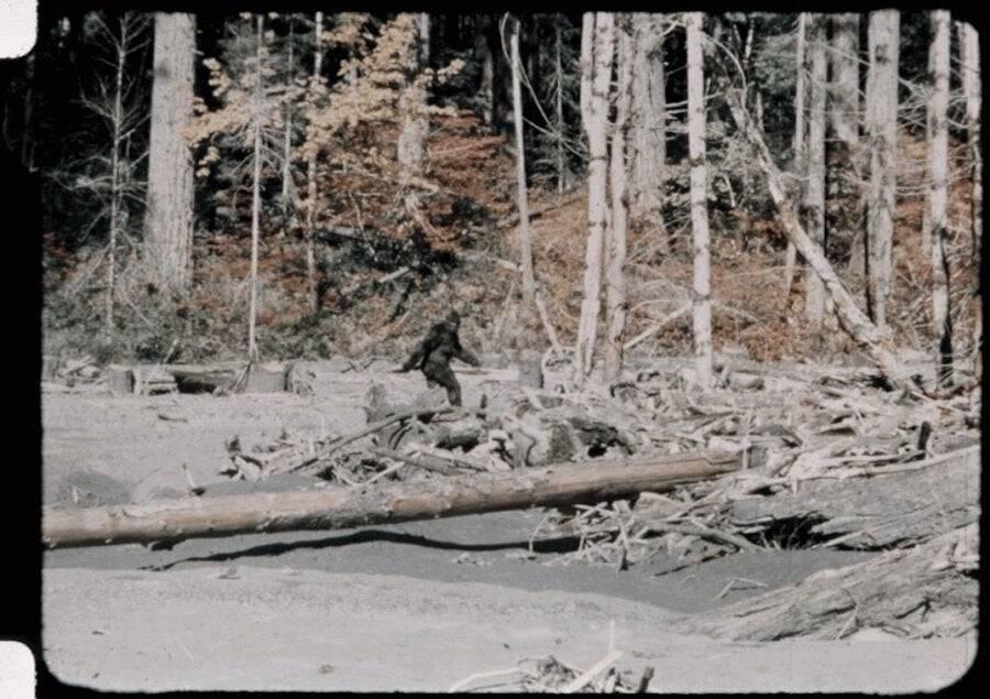 Patterson Gimlin Film Still