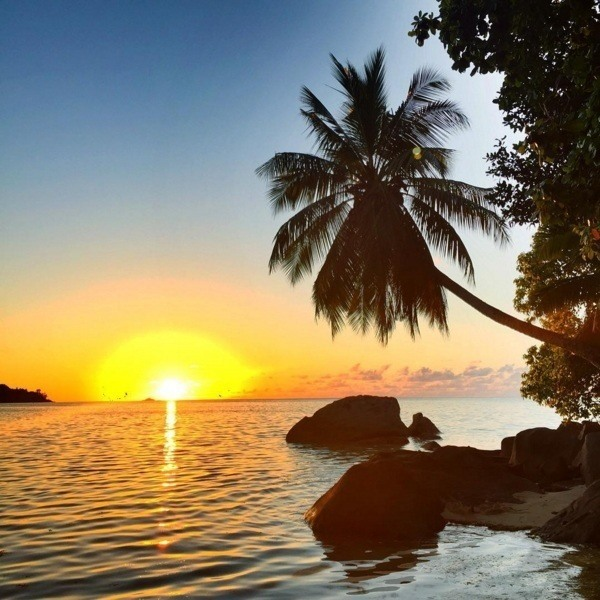 Tropical Sunset Palm Tree