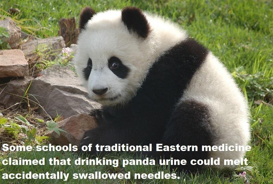 Panda Urine