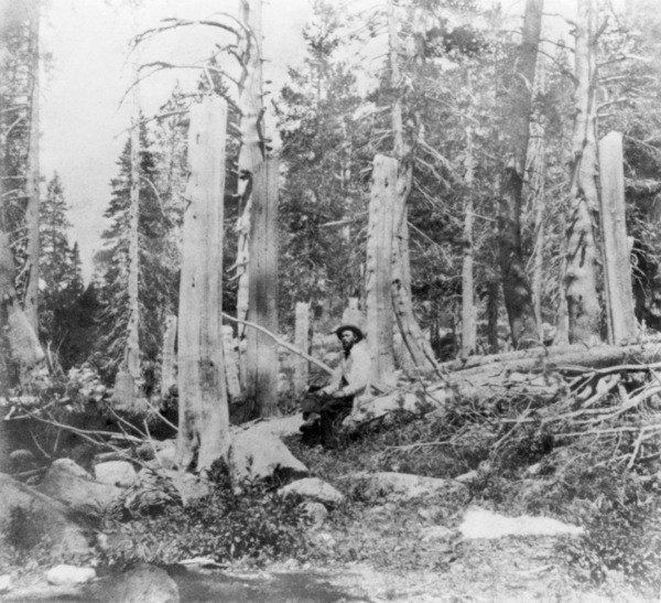 Donner Party Tree Stumps