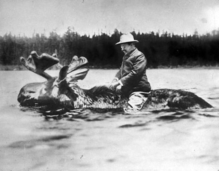 Teddy Roosevelt Riding Moose