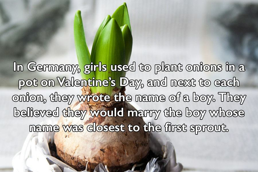 Onions On Valentine's Day