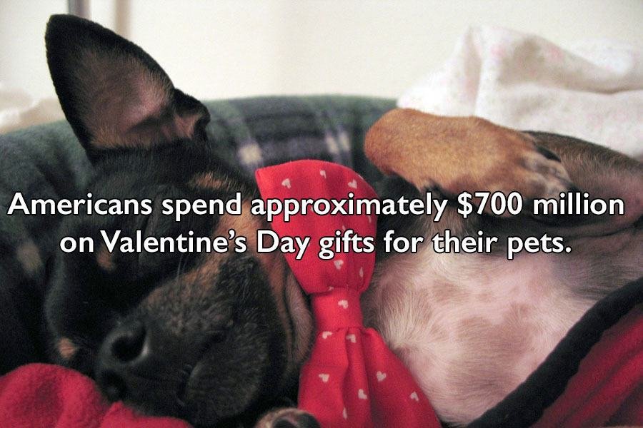 Valentines Day Facts About Pets