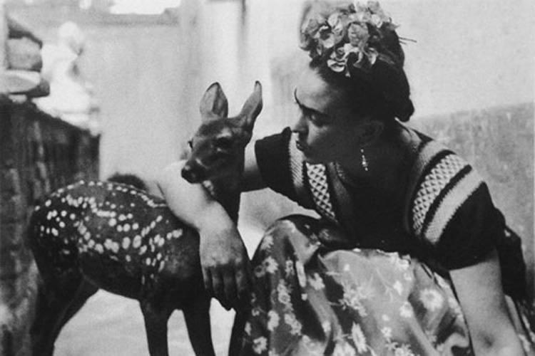 Frida Kahlo Life With Fawn