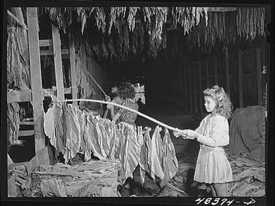 Great Depression Photos Tobacco
